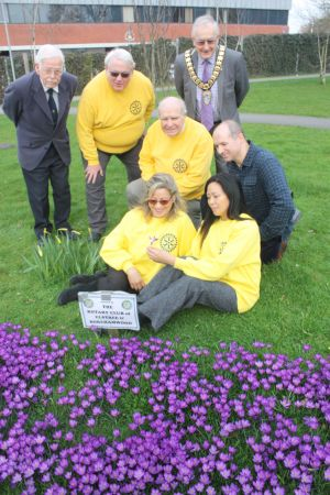 Rotary Club Bulb Planting in Blume